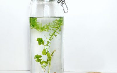 DIY express : plante aquatique